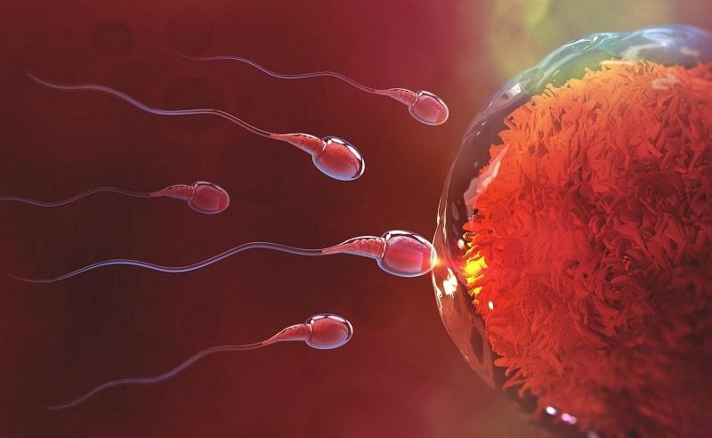 Comment savoir si l'ovule a été fécondé